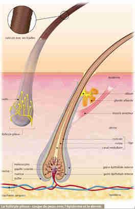 La vitamine et à la nicotine pour les cheveux